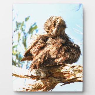 PLAQUE PHOTO FROGMOUTH FAUVE QUEENSLAND RURAL AUSTRALIE
