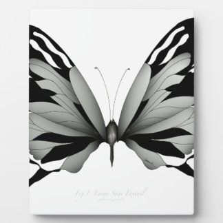 Plaque Photo Grand papillon sage de vulpin