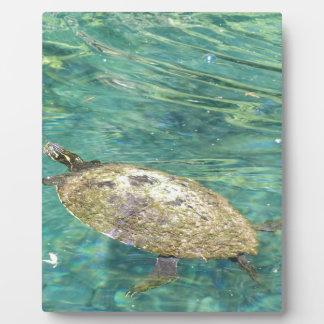 Plaque Photo grande natation de tortue de rivière
