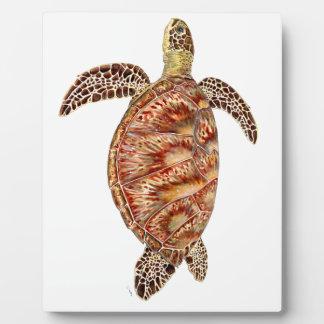 Plaque Photo Green turtle - Tortue verte Chelonia mydas