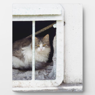 Plaque Photo Le chat sans abri observe la rue