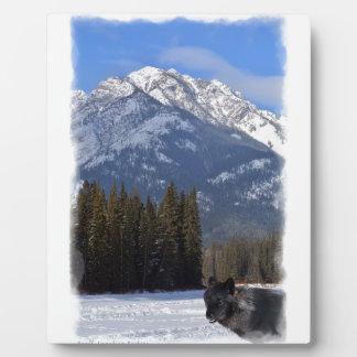 Plaque Photo Loup de Banff en hiver avec la cascade de Mt