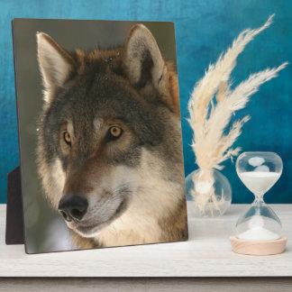 Plaque Photo Loup européen