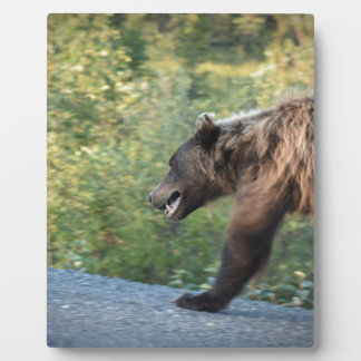 Plaque Photo L'ours gris le Yukon, Canada attaque, des