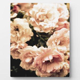 Plaque Photo Nostalgie de roses