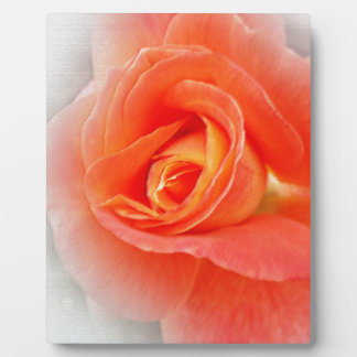 Plaque Photo nuances de rose en pastel