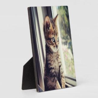 Plaque Photo Observation tigrée de chaton