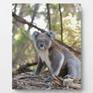 Plaque Photo Ours de koala gris et blanc