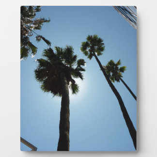 Plaque Photo Palmiers Los Angeles Hollywood Etats-Unis