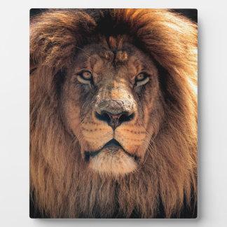 Plaque Photo Plan rapproché de lion