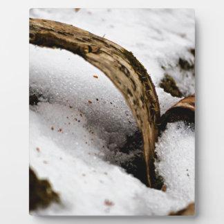 Plaque Photo Plancher de forêt