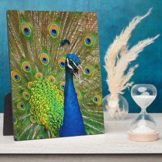 Plaque Photo Plumage parfait de paon