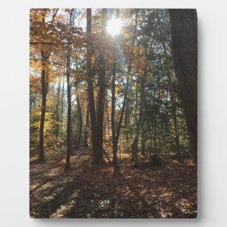 Plaque Photo Promenade dans les bois