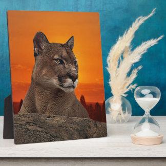 Plaque Photo Puma au coucher du soleil