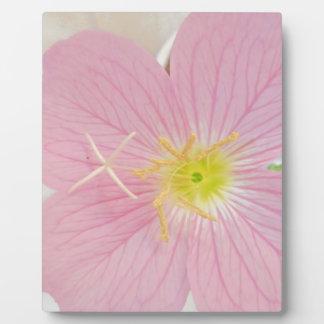 Plaque Photo rose de primevère