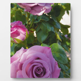 Plaque Photo Roses vibrants
