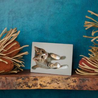 Plaque Photo Sauter de chat de calicot