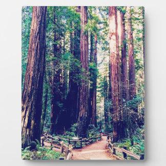 Plaque Photo Séquoias de Californie