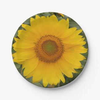 Plaques à papier de tournesol jaune d'or assiettes en papier