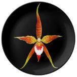 Plat de porcelaine de fleur d'orchidée de Brassia