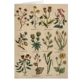 Plat des plantes carte de vœux