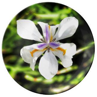 Plat féerique de porcelaine d'amende d'iris assiette en porcelaine