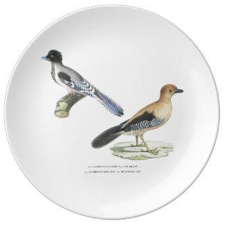 Plat indien de geais assiettes en porcelaine