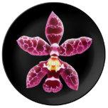 Plat rose de porcelaine de fleur d'orchidée de Wil
