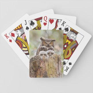 Plate-forme des cartes de jeu avec des hiboux jeu de cartes