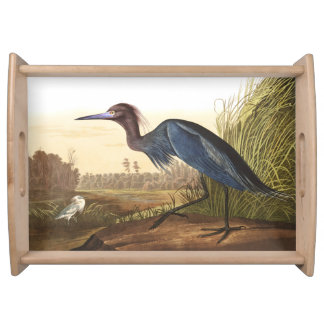 Plateau bleu de portion de faune d'oiseaux de