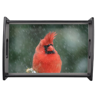 Plateau Cardinal dans un pin pendant une tempête de neige