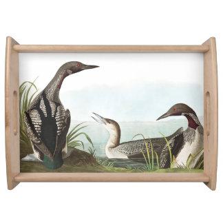 Plateau de portion de faune d'oiseaux de dingue de