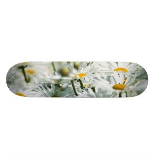 Plateau De Skateboard Les Etats-Unis, Orégon, vallée de Willamette,