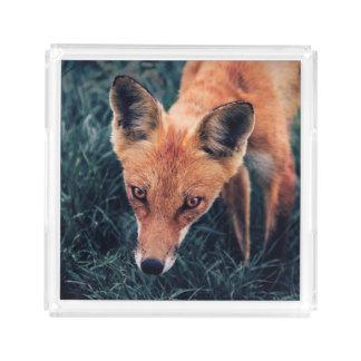 Plateau En Acrylique Le Fox rouge