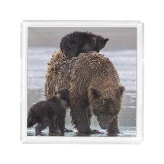 Plateau En Acrylique Parc national de Clark de lac bear de Brown |