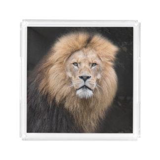 Plateau En Acrylique Portrait de plan rapproché d'un lion masculin