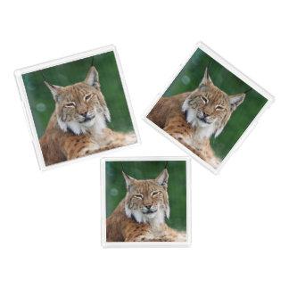 Plateau En Acrylique Portrait renversant de chat sauvage