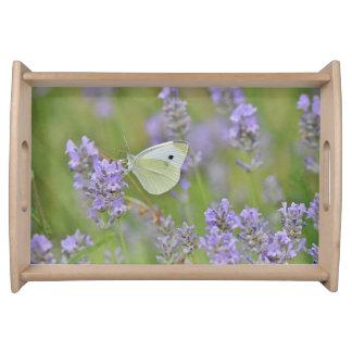Plateau Papillon de blanc de chou