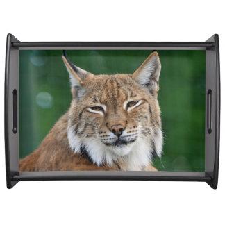 Plateau Portrait renversant de chat sauvage