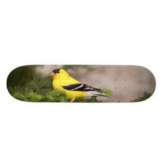 Plateaux De Skateboards Customisés Mâle américain de chardonneret dans un arbre