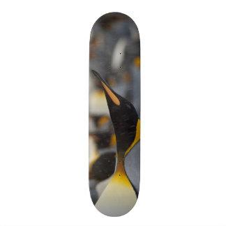 Plateaux De Skateboards Customisés Plaine d'île du sud de la Géorgie, Salisbury. En