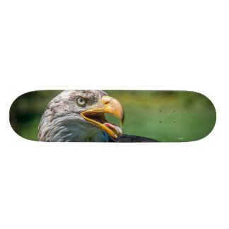 Plateaux De Skateboards photo d'aigle
