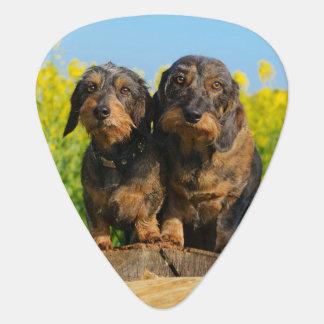 Plectre mignon de photo de Dackel de deux chiens Onglet De Guitare