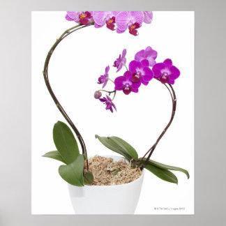 Pleine orchidée de cadre d isolement sur un arrièr posters