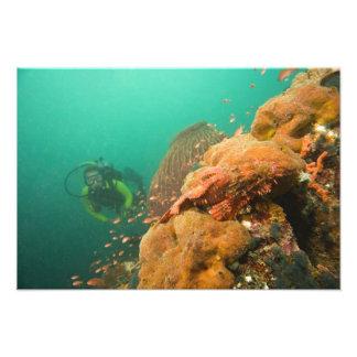 plongeur autonome et rascasse Scorpanopsis Photographies