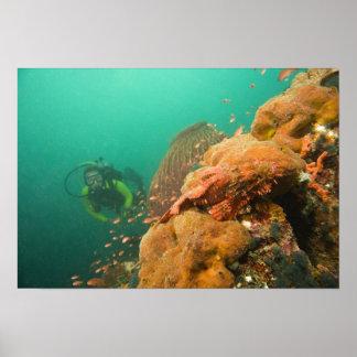plongeur autonome et rascasse Scorpanopsis Poster