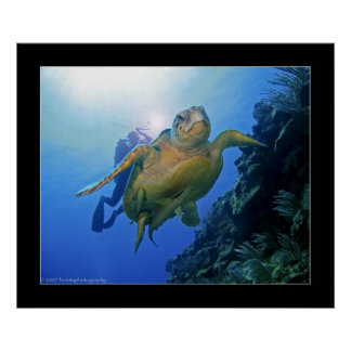 Plongeur et tortue à Belize Affiches