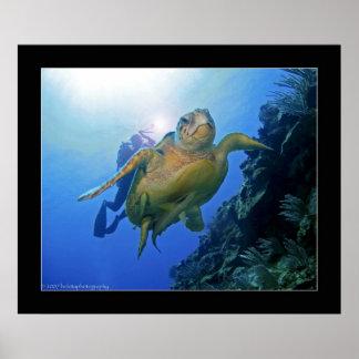 Plongeur et tortue à Belize Poster