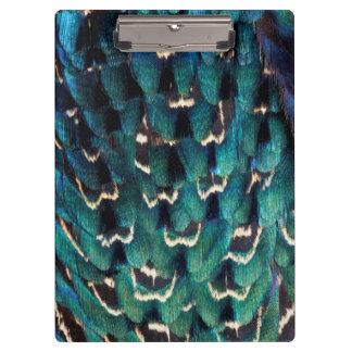 Plume Anneau-étranglée bleue de faisan