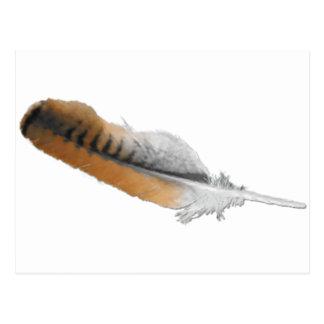 plume de faucon de Rouge-queue Carte Postale